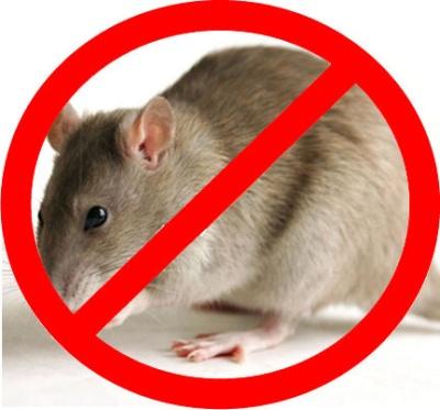 истребление крыс и мышей в Москве