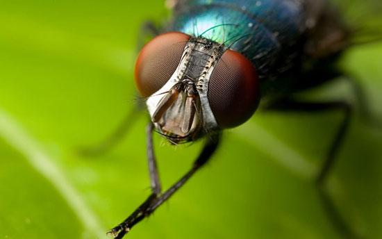 Как избавиться от мух в квартире в домашних условиях